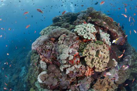 indonesia bali nusa lembonga nusa penida
