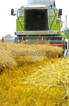 mahdrescher at the wheat harvest