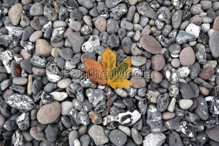 leaf detail colour stone leaves beach