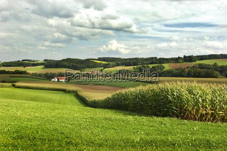house building houses green meadows corn