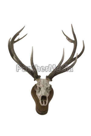 optional animal wild animals hunter skull