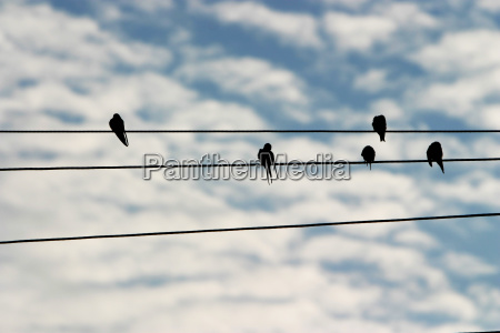 animal bird animals five cloud birds
