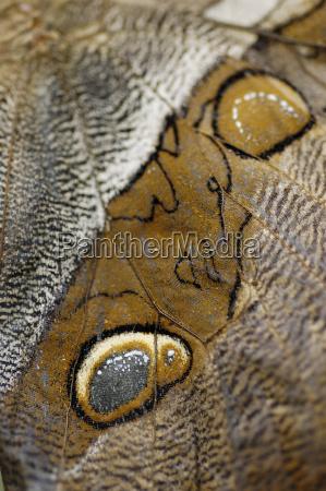 detail of a butterfly flugel banana