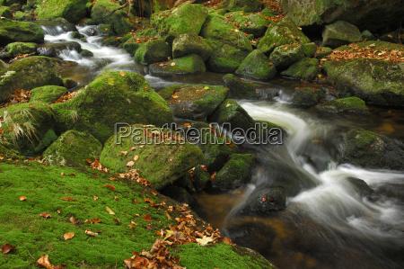 bergbach small ohe bavarian forest bavaria