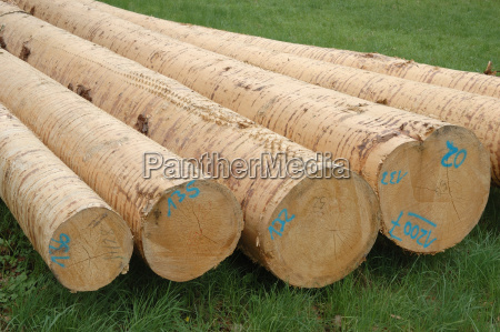 stock provision wood trunk tribes pared