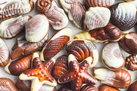 sweet chocolate seashells