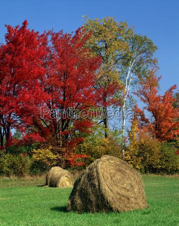 usa america meadows hay clench portrait