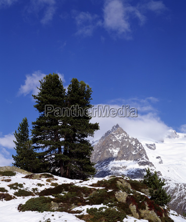 mountains alps clump of trees europe