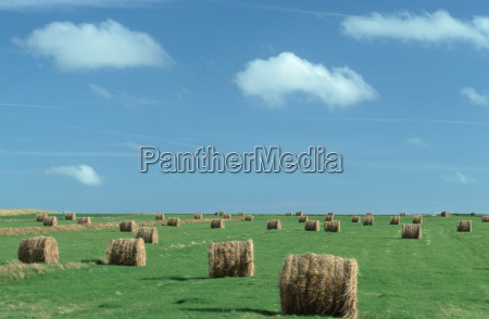 summer summerly europe meadows hay clench