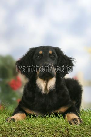 studio photography animal pet mammal animals