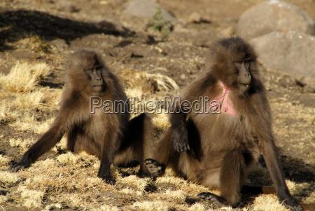 travel animal mammal national park africa