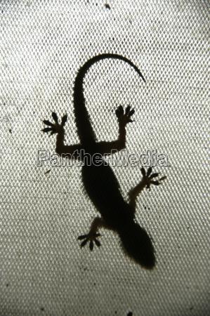 travel asia india third reptiles gecko