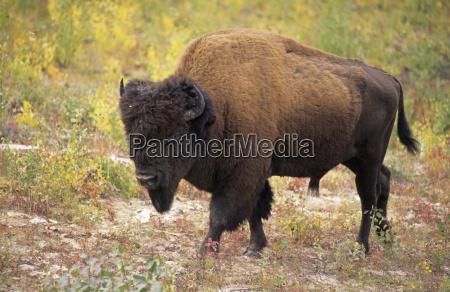 animal mammal national park strong animals