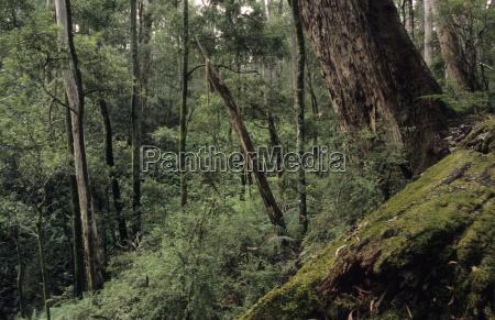 tree trees green national park virgin