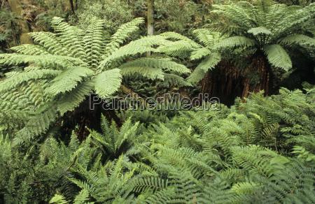 rainforest rainforest otway national park great