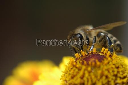 bee on blood