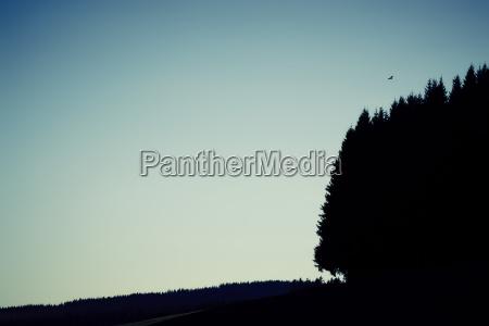 forest sky bird