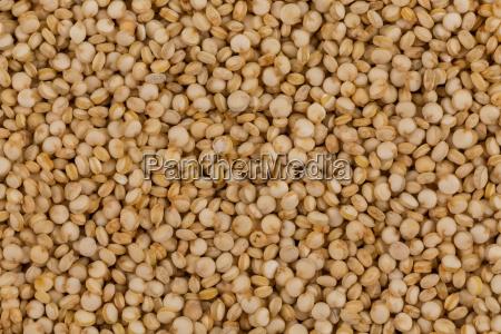 quinoa seeds close up