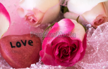 three beautiful roses with a heart