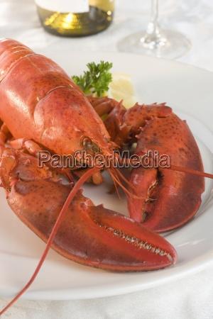still life of lobster and wine