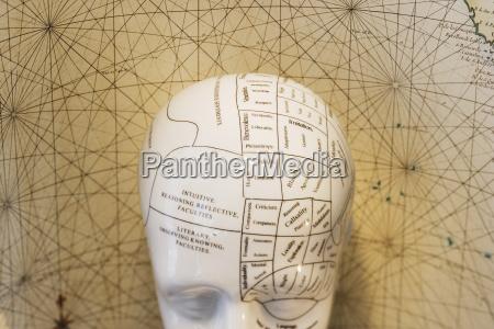 close up of phrenology head diagram