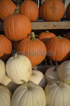 orange and yellow pumpkin on display