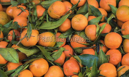 clementines at farmers market