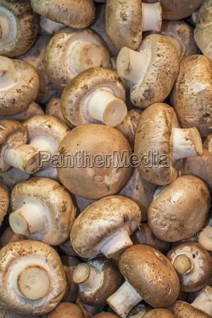 close up of mushrooms on market