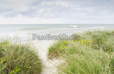 sandy beach overgrown with marram grass