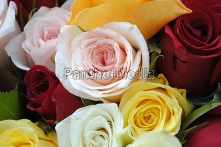 multicolored bouquet of roses in full