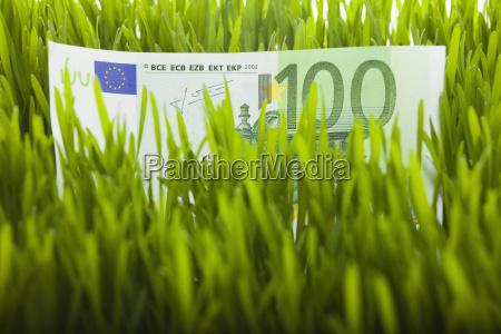 100 euro bill in grass