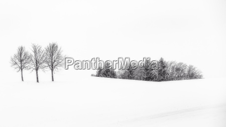 winter landscape in the foothills of