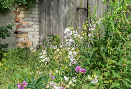 flowers and stinging nettles in front