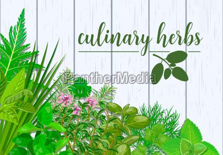 farm fresh culinary herbs on white