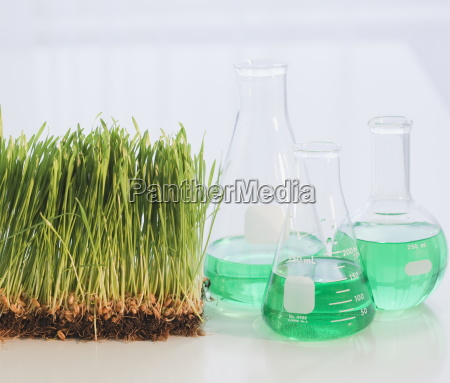 chemicals in flasks beside grass