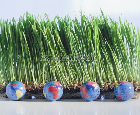 four globes beside grass