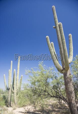 low angle view of cactus arizona