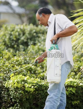 man watering shrubs