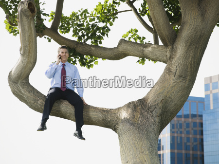 businessman sitting in tree