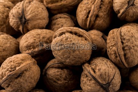 walnut nut closeup