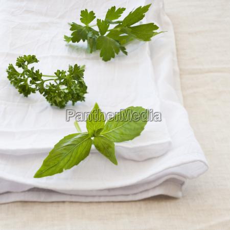 fresh herbs on napkin