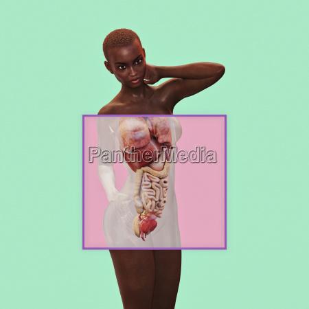 intestines of woman