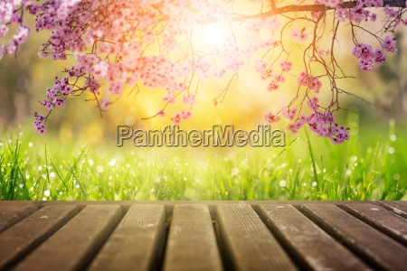 spring flowers and wooden deck in