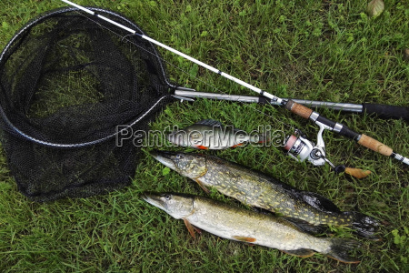 predator fishing