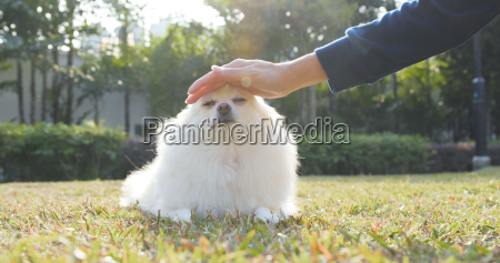 pet owner touching on her pomeranian