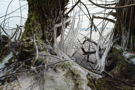 branch trees in the ice icy