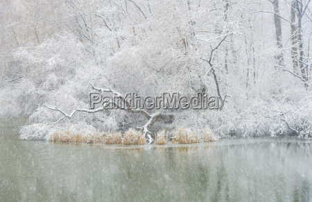 central park pond in winter