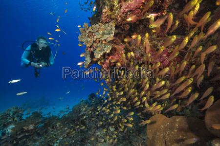 egypt red sea hurghada scuba diver