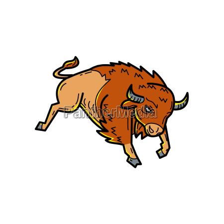 american buffalo jumping mono line
