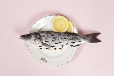 lemon fish pink plate rosebush thorns